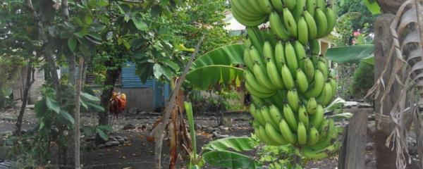 En 2020 seguimos con 17 Microcréditos Agrícolas
